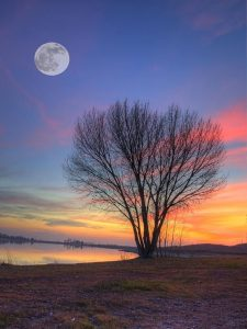 full moon tree by the river_edited